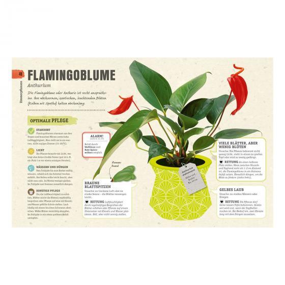 So überleben Zimmerpflanzen garantiert | #5