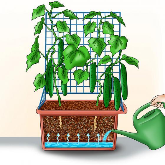 Gemüsepflanzer mit Rankgerüst | #5