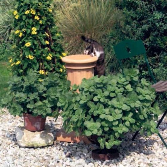 Bunte 'Verpiss-Dich' Pflanze | #5