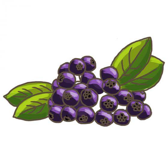 Blu Bio Aronia Vitaminbeere | #6
