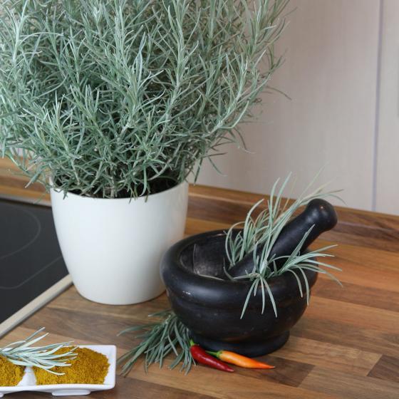 BIO Kräuterpflanze Currykraut, im ca. 12 cm-Topf | #6