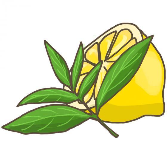 Blu Bio-Kräuterpflanze Zitronenverbene | #6