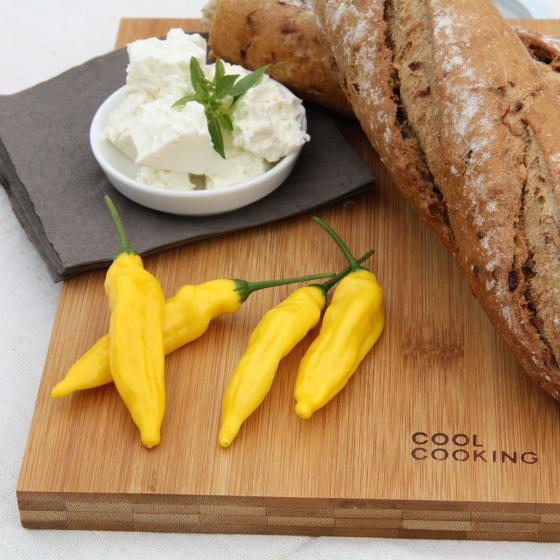 BIO Gemüsepflanze Zitronen-Chili Lemon Drop, im ca. 12 cm-Topf | #6