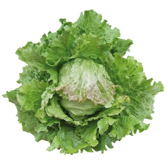 Saatgut-Holzbox Salatvielfalt, 7 Saatgut-Sorten | #6