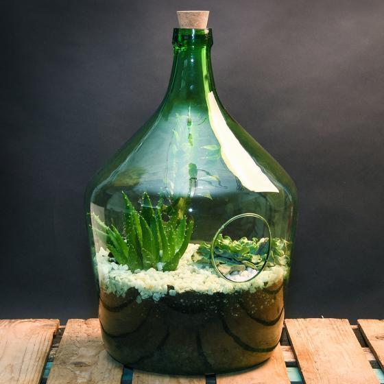 DIY Terrariumflasche mit Seitenöffnung, Komplettset, 3 Liter | #6