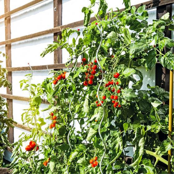 5er-Set Tomatenspiralstäbe, 150 cm | #6