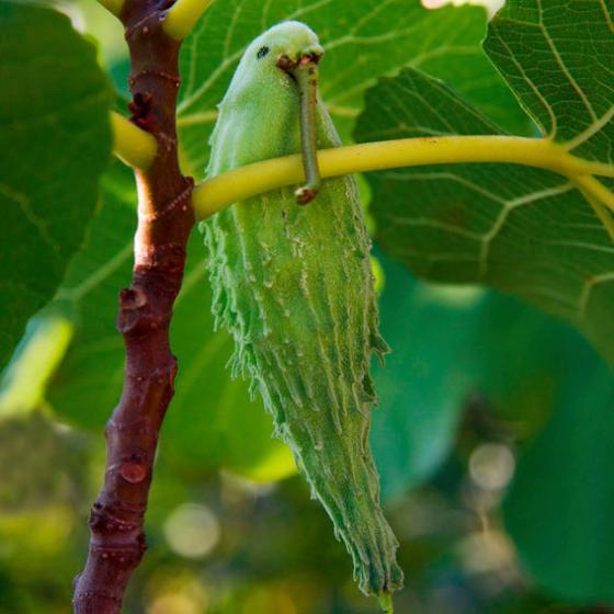 Papageien-Blume | #6