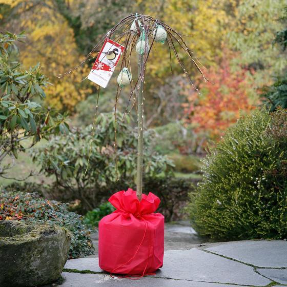 Vogelfutterbaum, im ca. 23 cm-Topf | #7