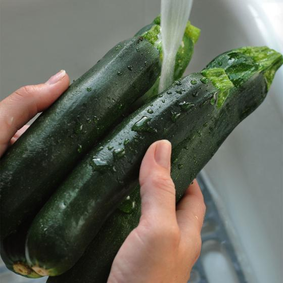 BIO Gemüsepflanze Balkon-Zucchini, im ca. 12 cm-Topf | #7