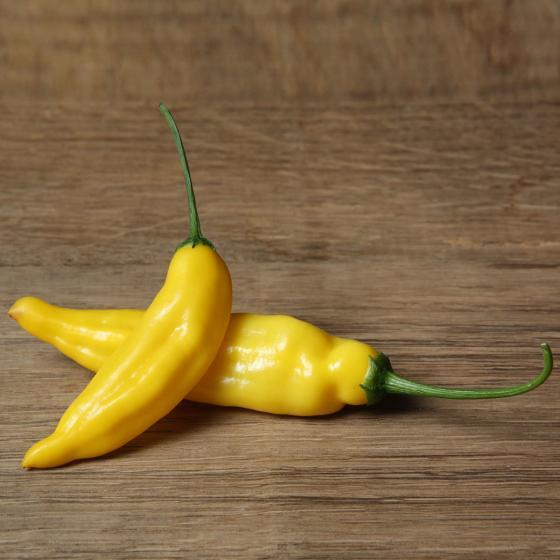 BIO Gemüsepflanze Zitronen-Chili Lemon Drop, im ca. 12 cm-Topf | #7