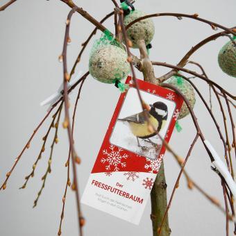 Vogelfutterbaum, im ca. 23 cm-Topf | #8