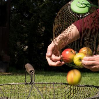 Apfel- und Nuss-Sammler mit Teleskopstiel | #8