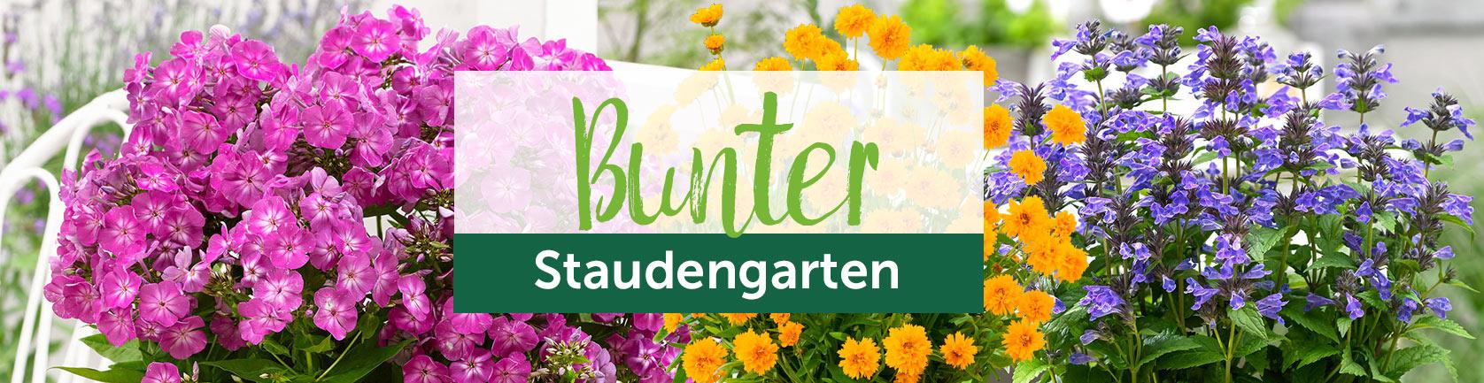 Bunter Staudengarten