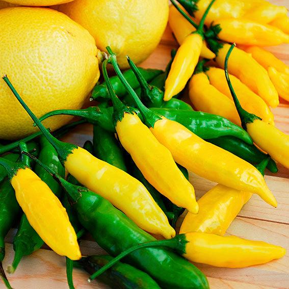 Zitronen-Chilisamen Lemon Drop