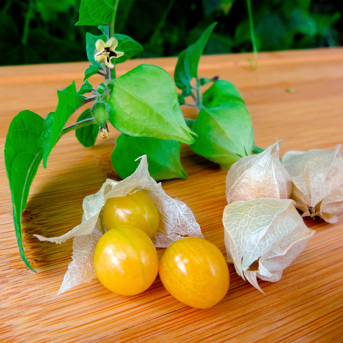 Andenbeerensamen Ananaskirsche Preciosa