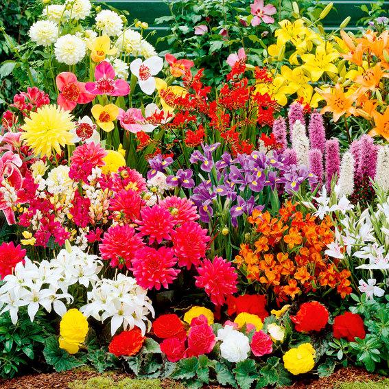 Set Überraschungs-Paket Blumenzwiebel XXL