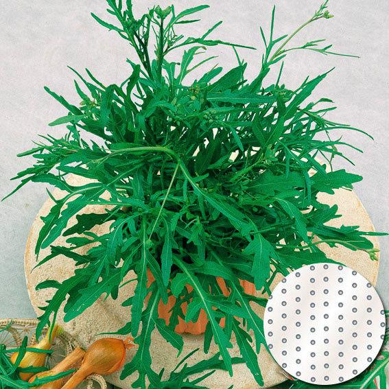 Saatscheiben Salatrucola Speedy, 10 cm Durchmesser