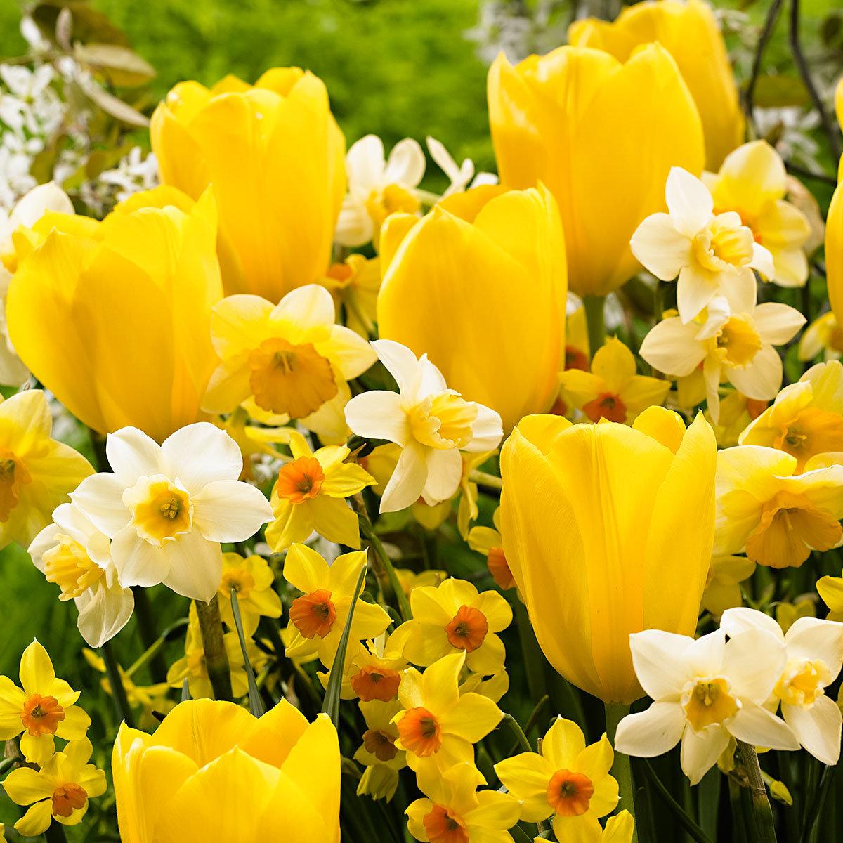 Frühlingssonne-Mischung