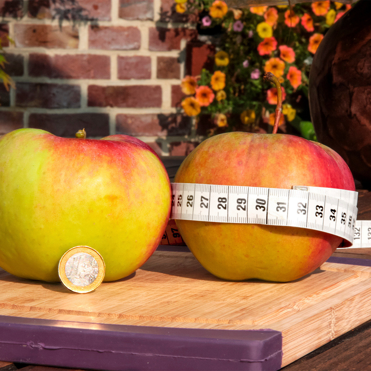 Riesen-Apfel Aport
