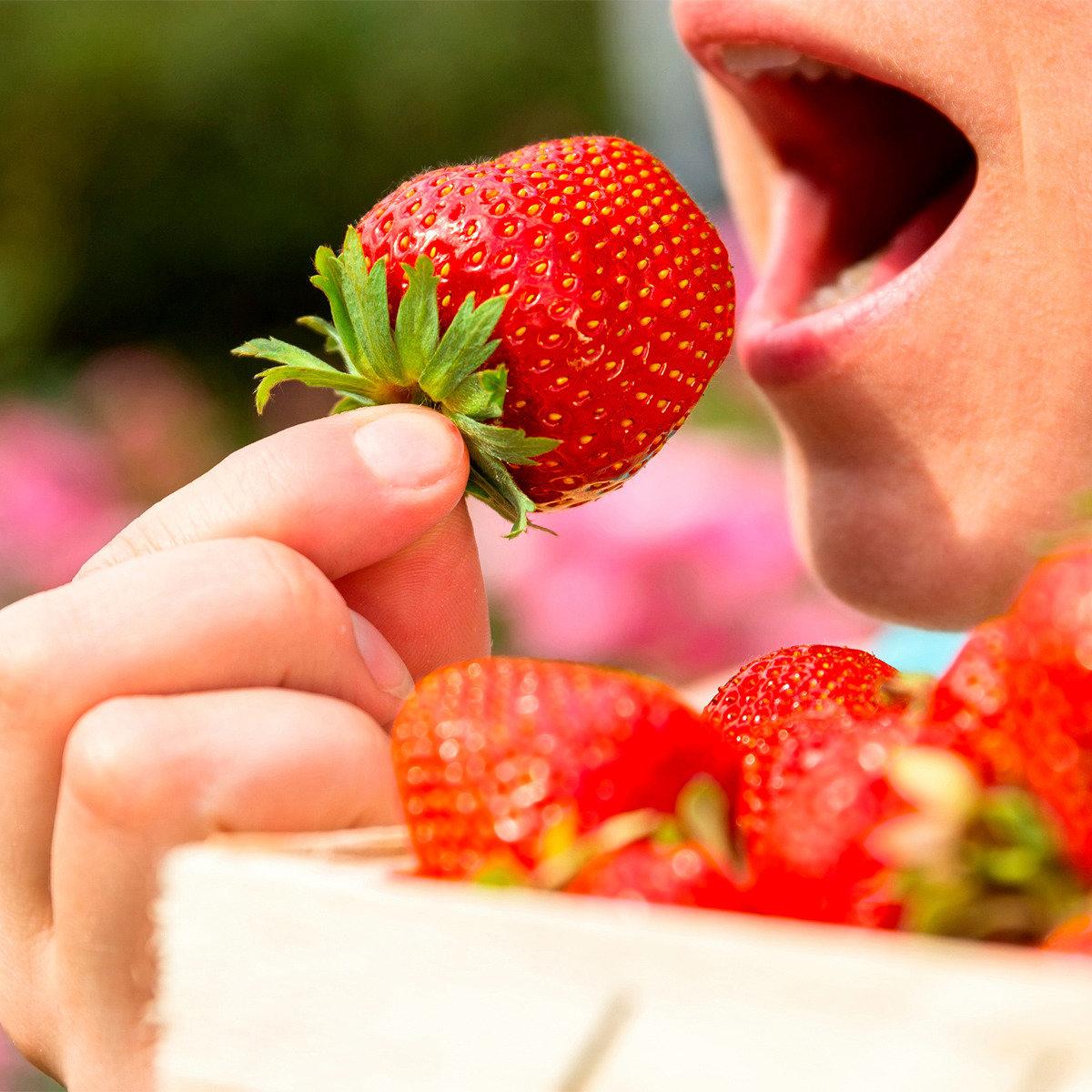Fridulin-Erdbeere Everlin, getopft