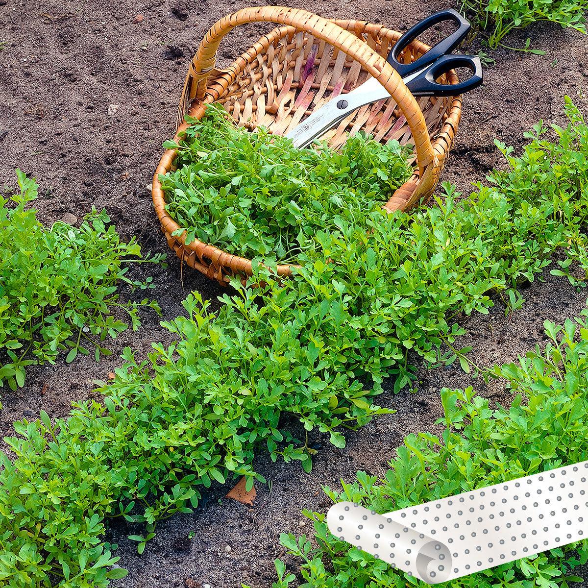 Saatband 4,5 m Salat-Kresse Olympus mit Unkrautblocker