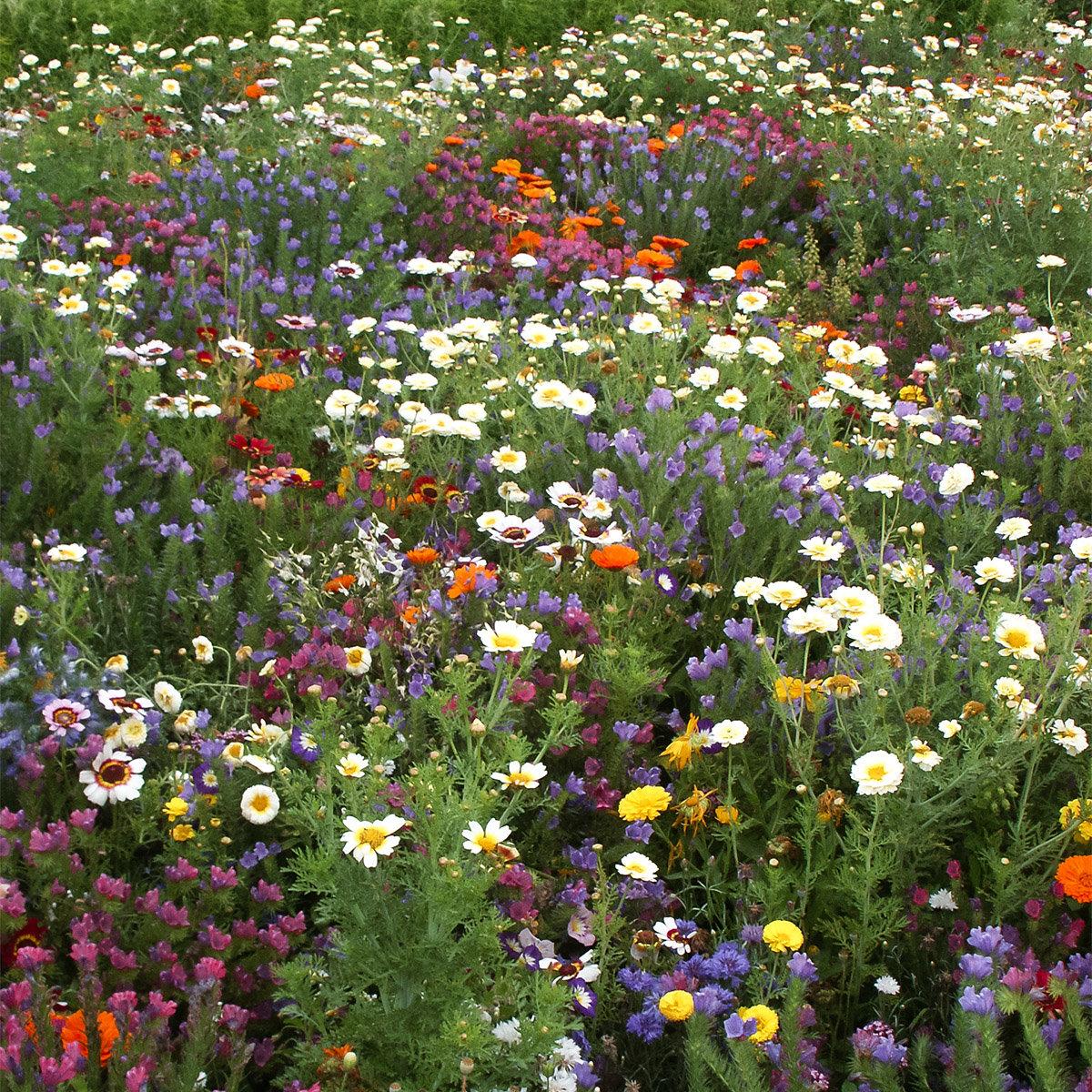 Blütenparadies, 250 g