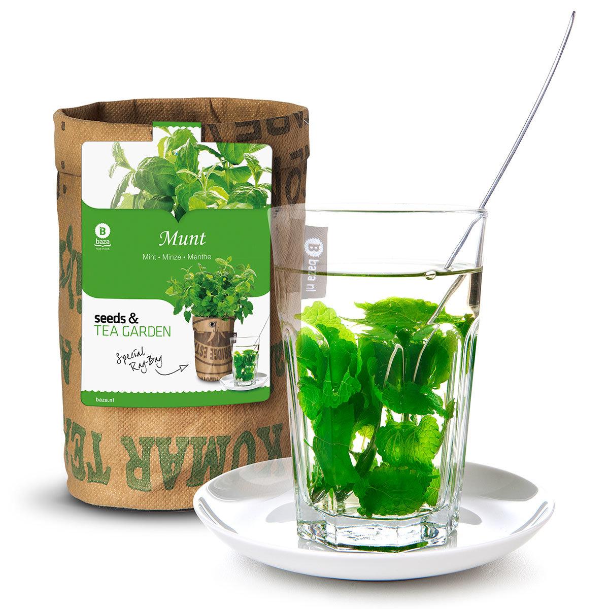Teegarten Bio Minzesamen im RAG Pflanzbeutel