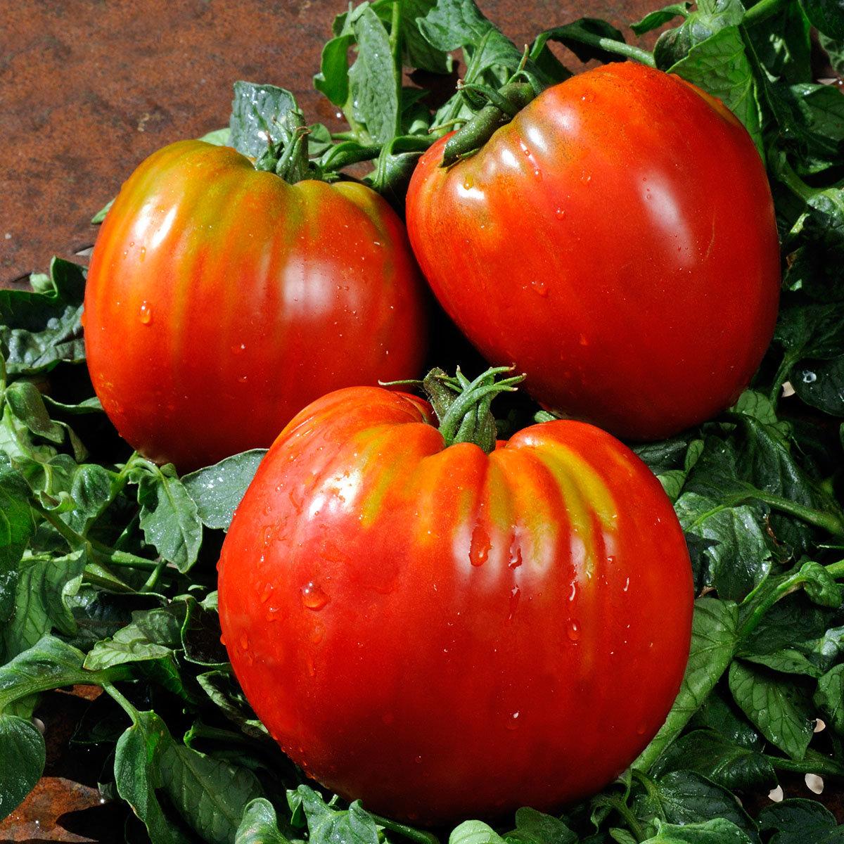 gem se pflanze tomate ochsenherz von g rtner p tschke. Black Bedroom Furniture Sets. Home Design Ideas