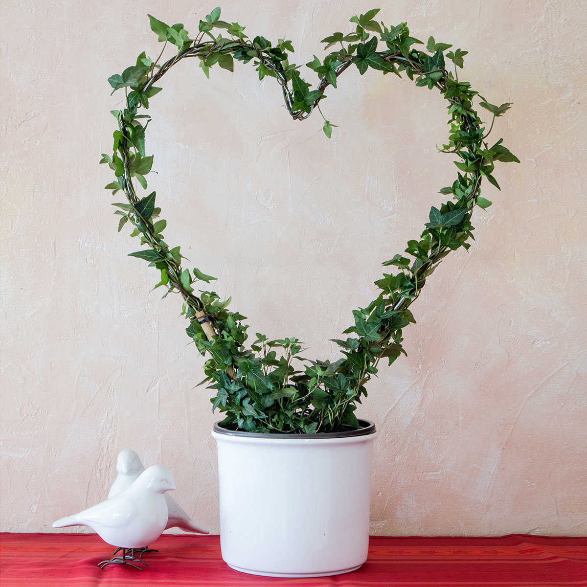 Zimmerefeu Herzform Valentinherz, groß