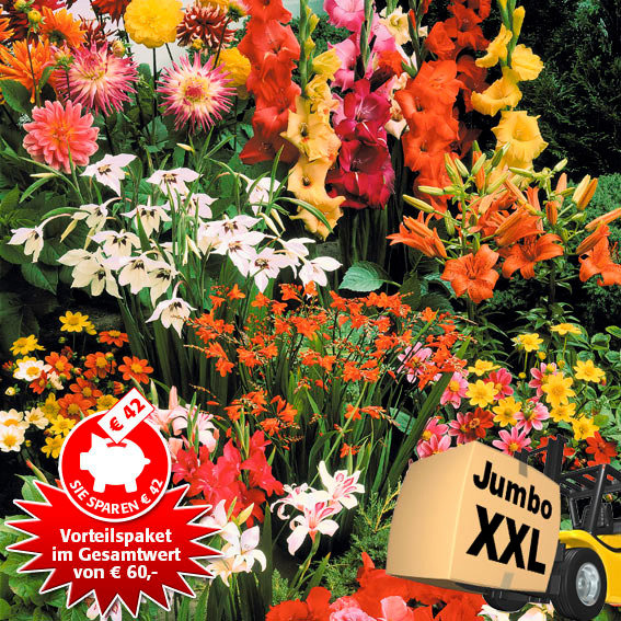 Blumenzwiebel-Paket Jumbo XXL