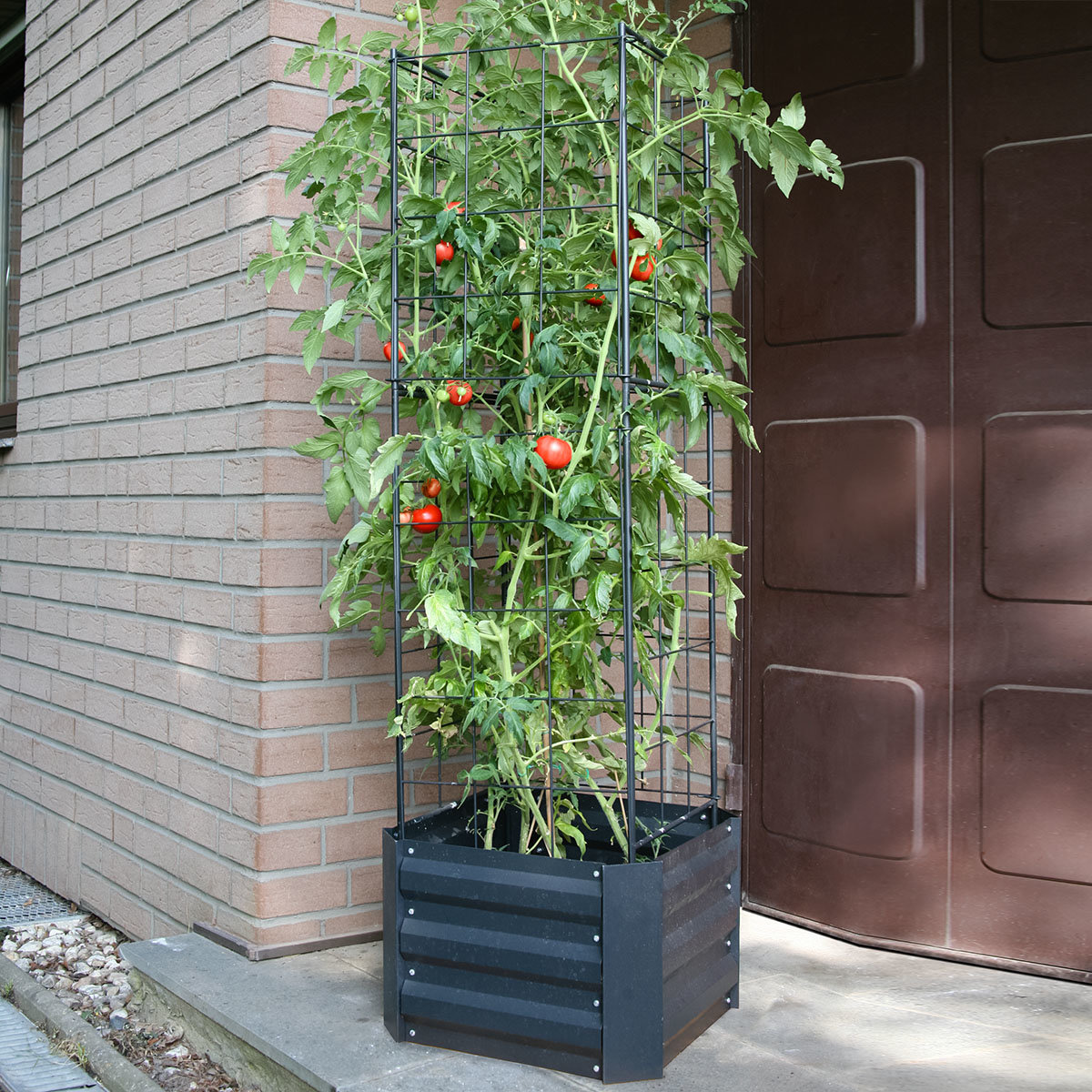 Tomaten-Rankturm Pro