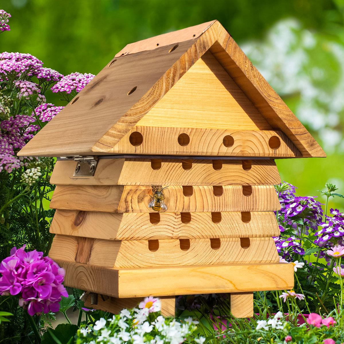 Bienenhaus Maja, Endeckerhaus zum öffnen mit Acrylglasplatte