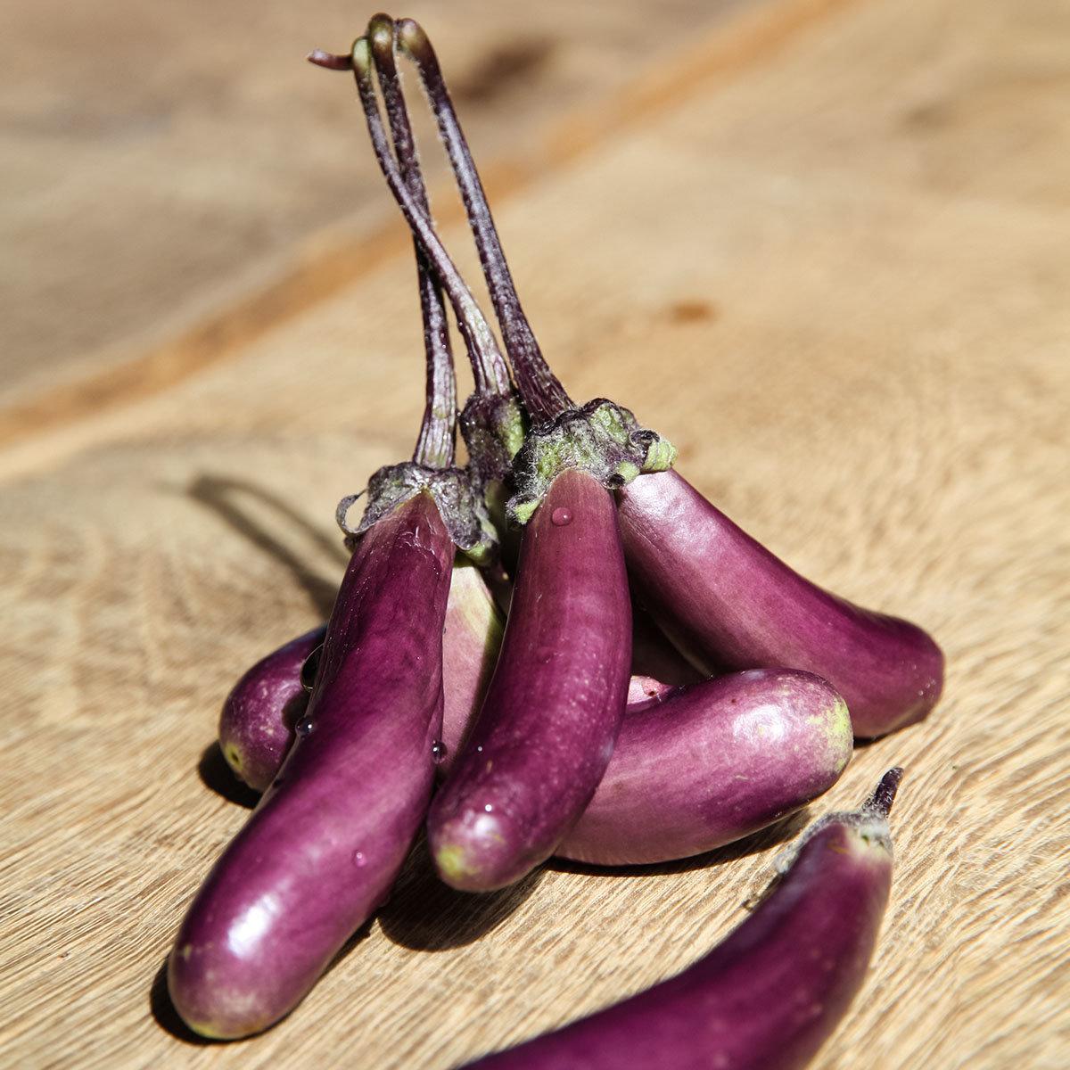 Auberginenpflanze Mini-Aubergine
