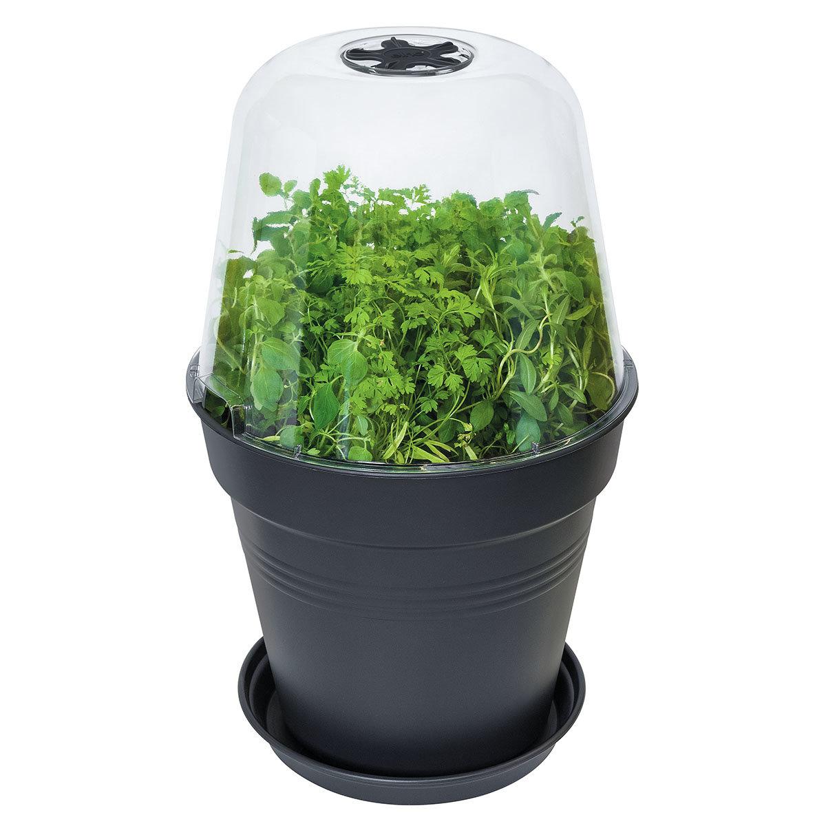 Anzucht-Pflanztopf Green Basics groß