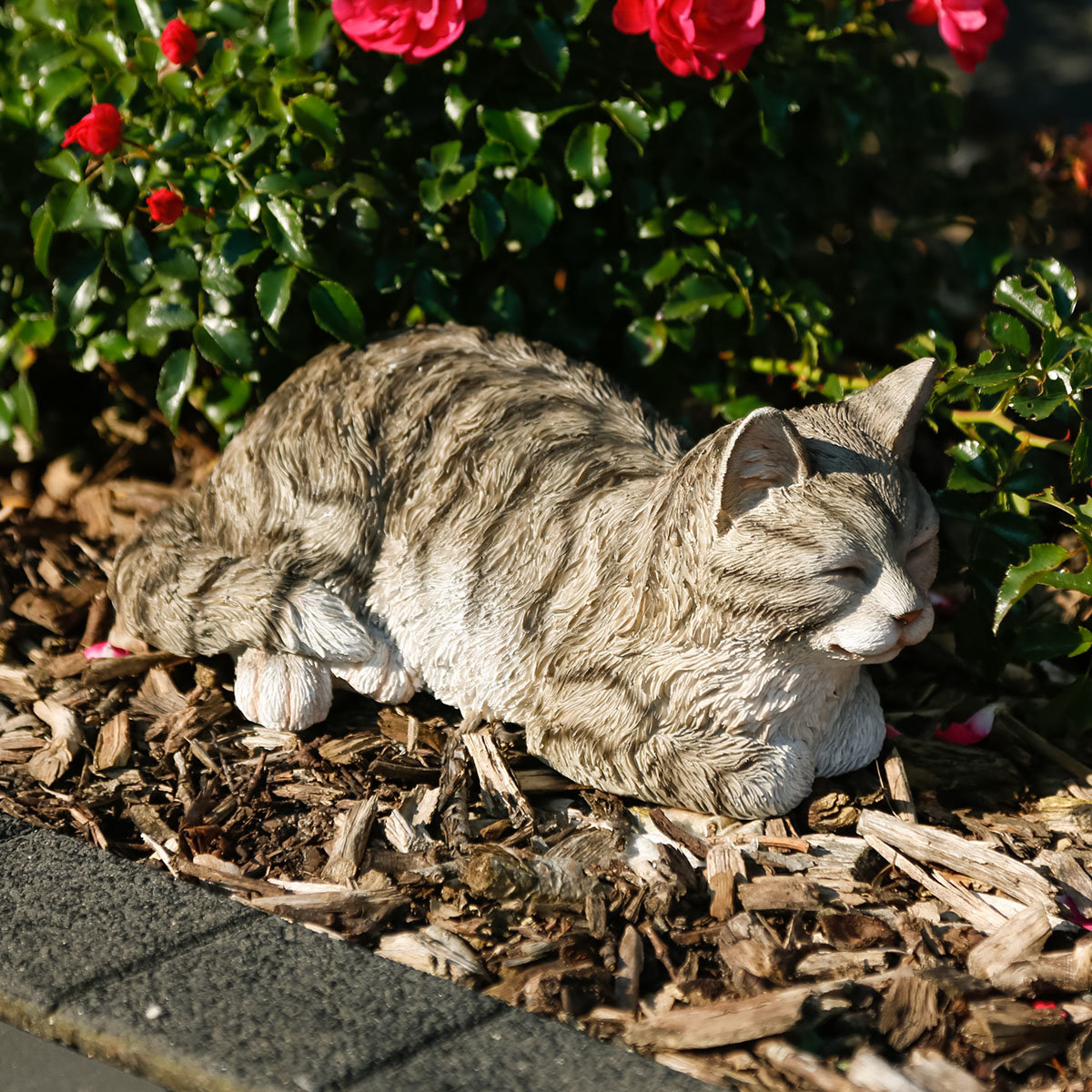 Kätzchen Schnurri