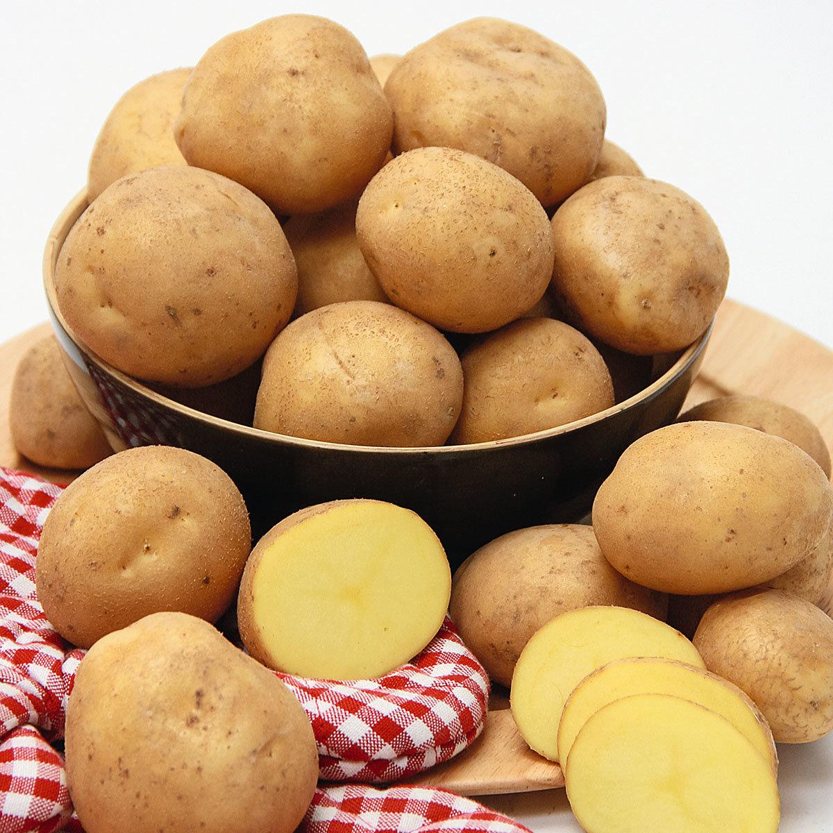 Kartoffel Otolia, 2,5 kg