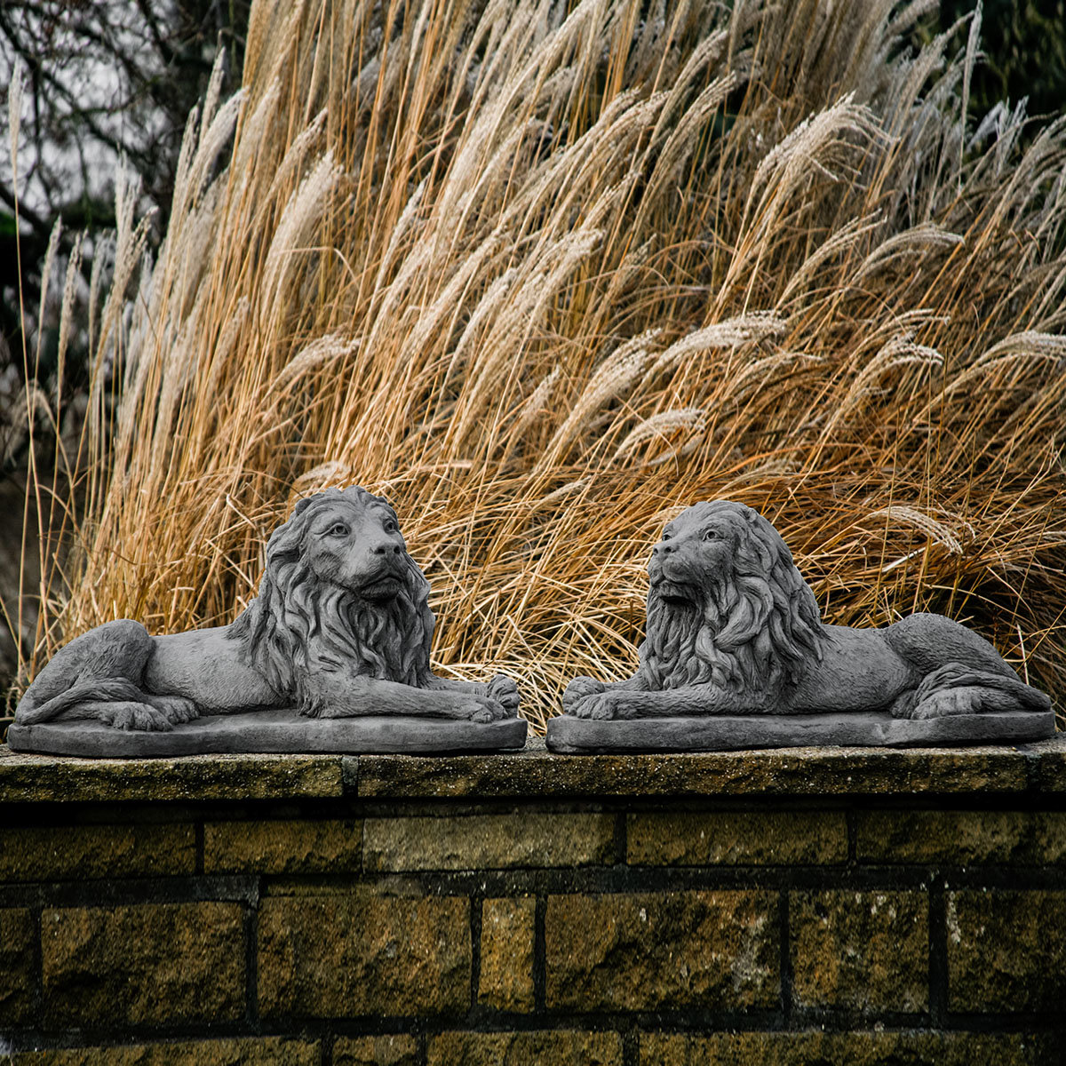 Löwenpaar Lionel & Leonidas
