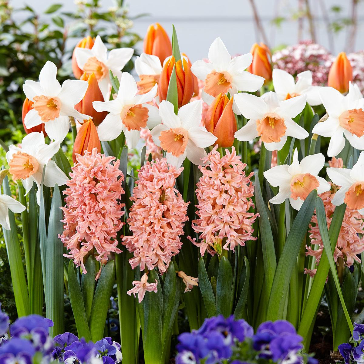 Blumenzwiebel-Sortiment Blütentraum