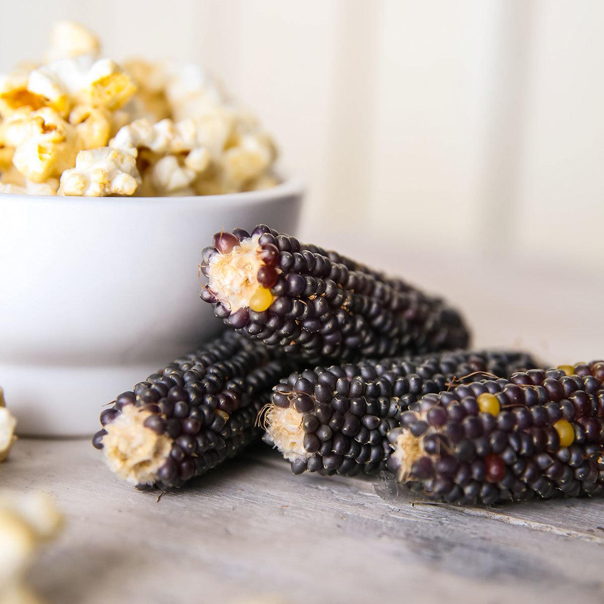 Maispflanze Schwarzer Popcorn-Mais
