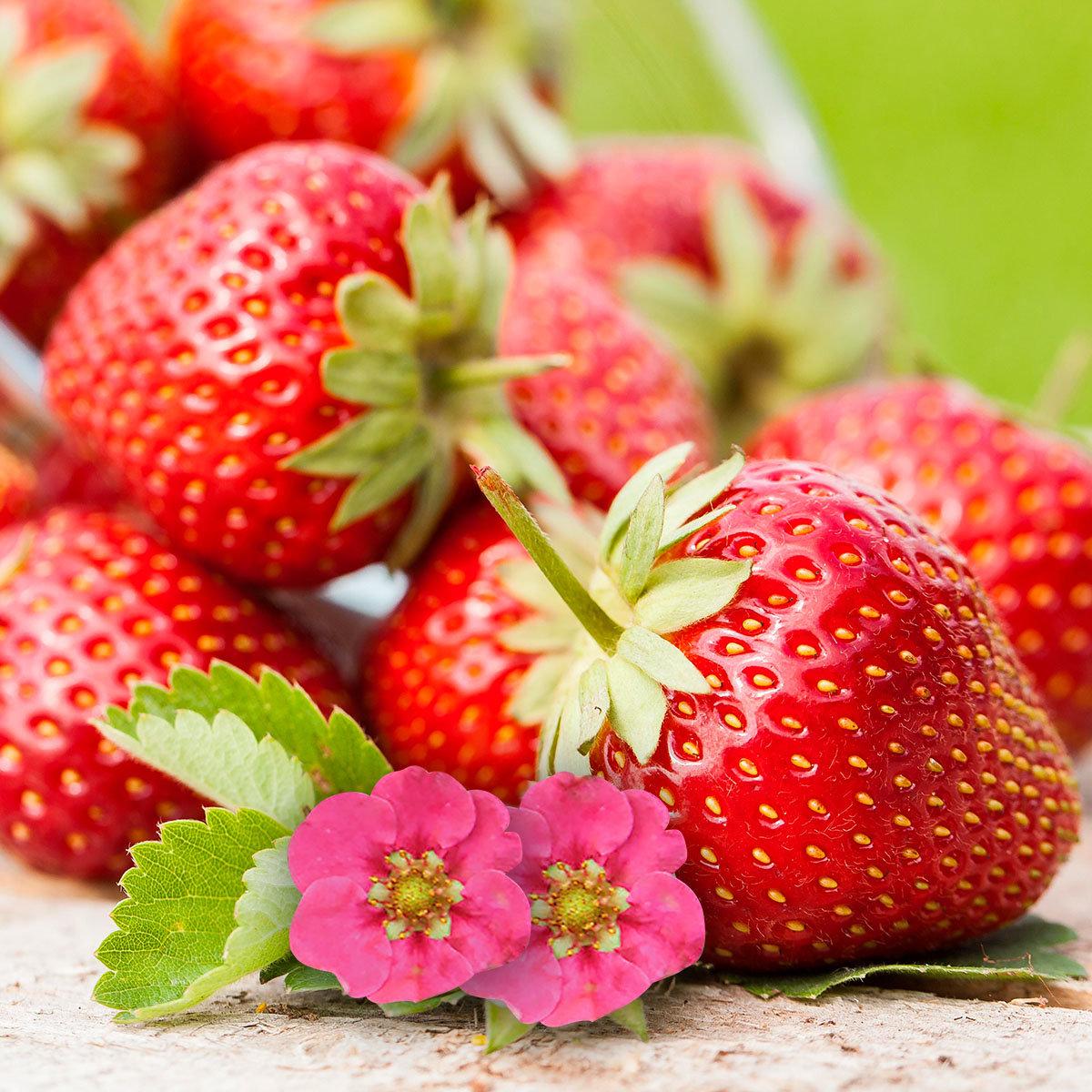 Kussmund-Erdbeere Toscana®, im ca. 9 cm-Topf