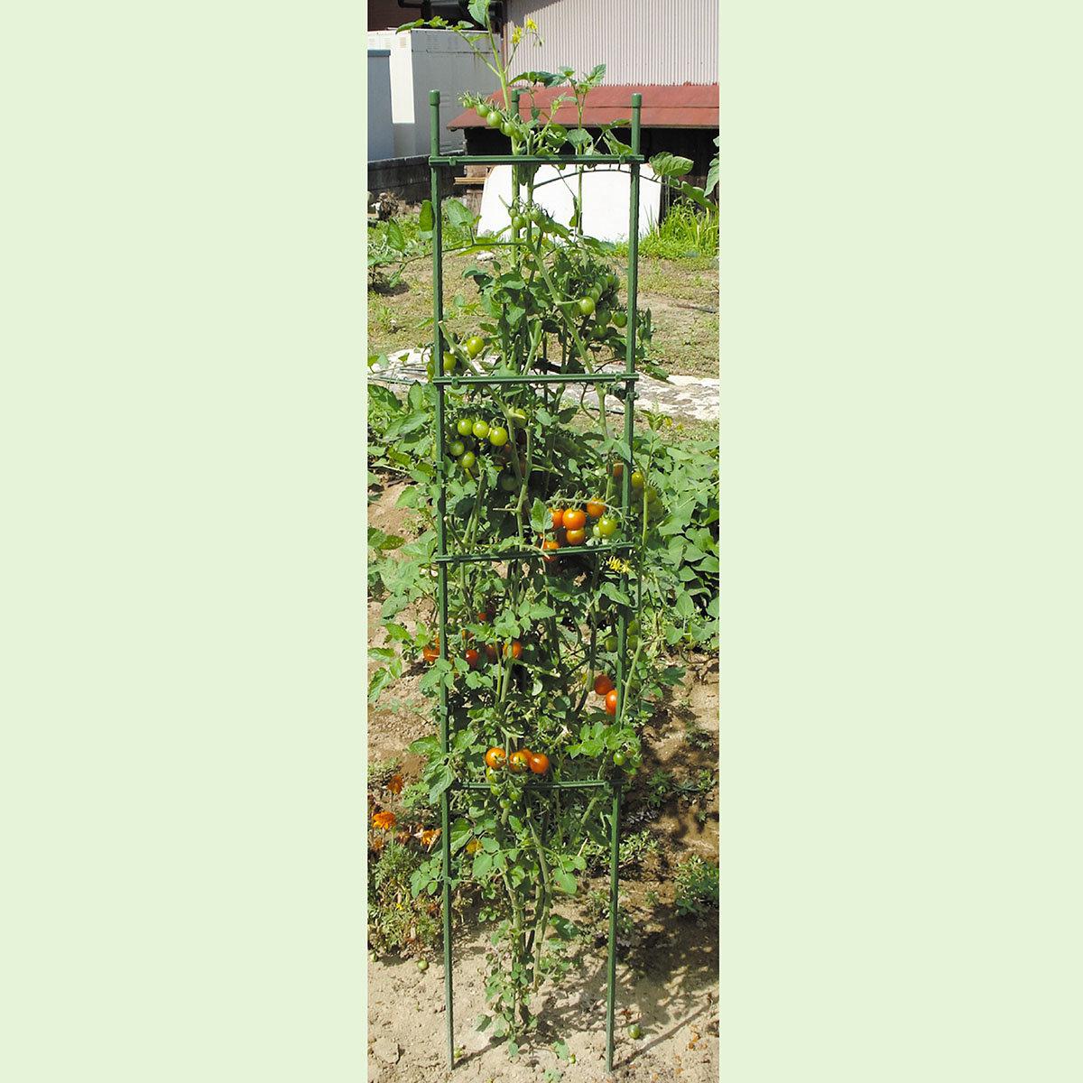 Tomaten-Rankturm, 150 x 30 cm