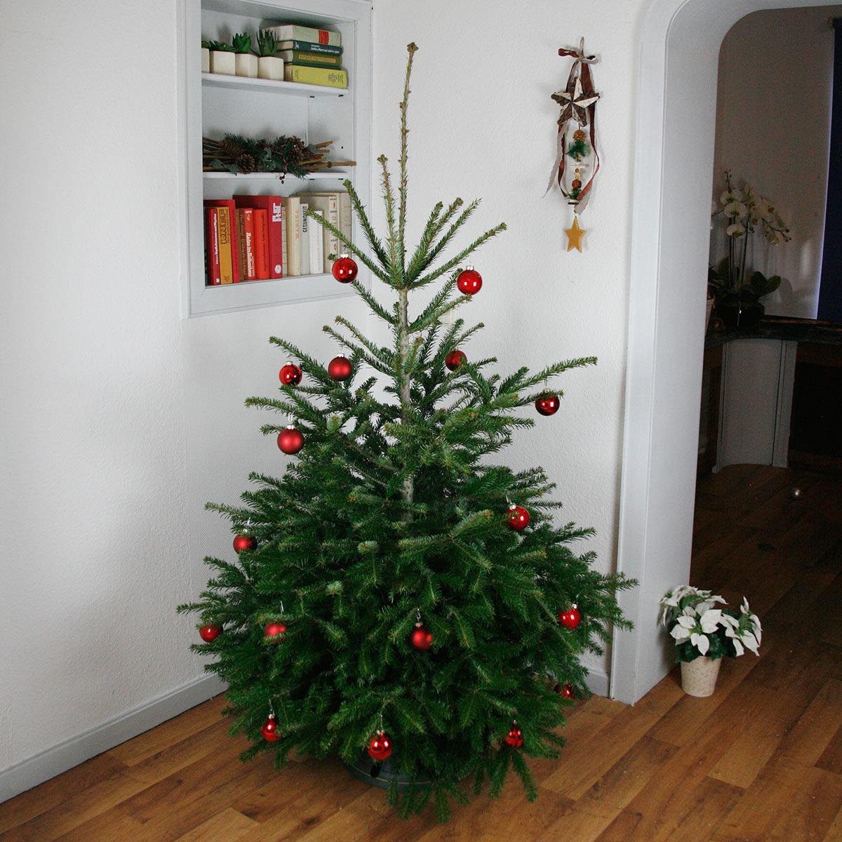 Premium Nordmanntanne 100-125 cm zur Advents-Deko