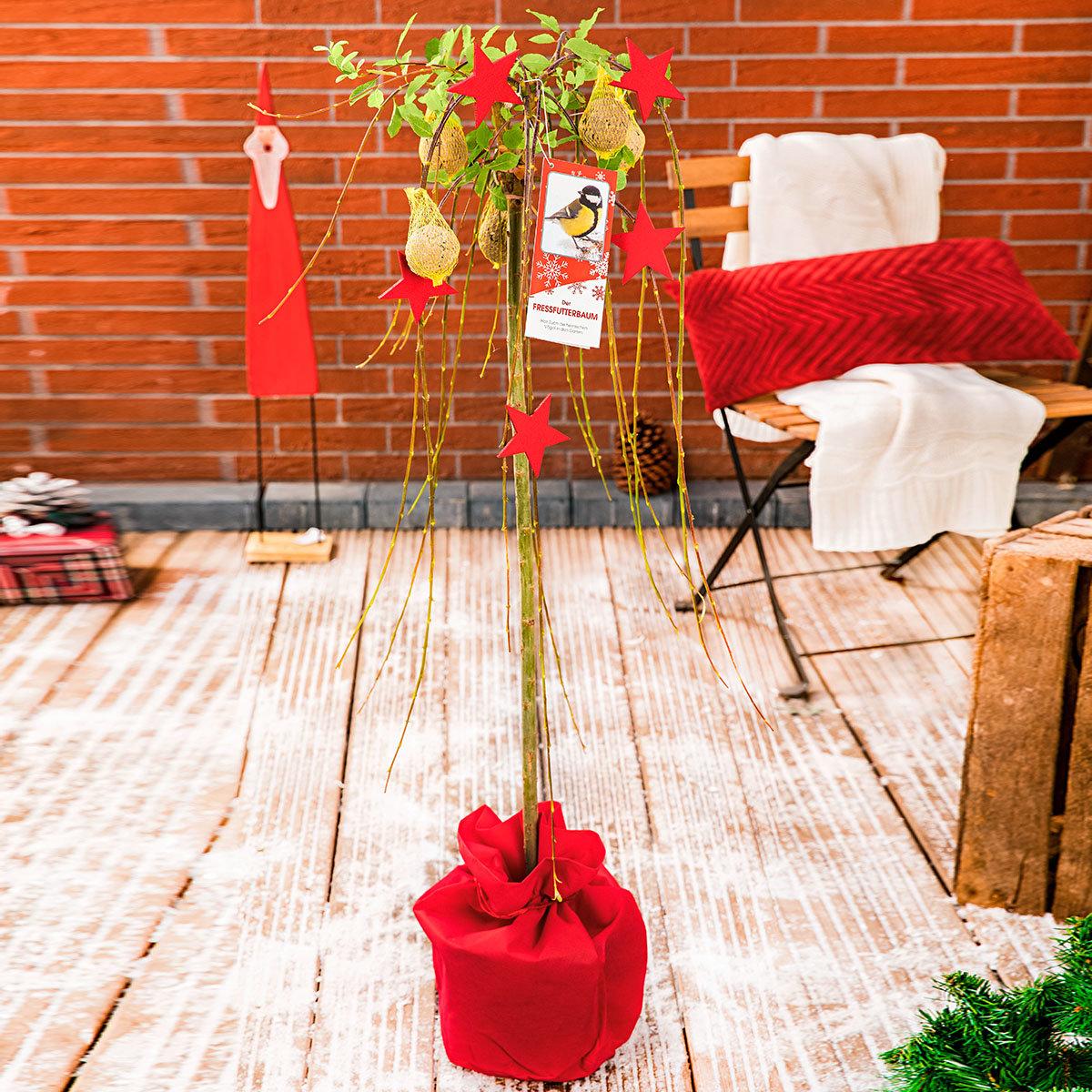 Vogelfutterbaum, im ca. 23 cm-Topf