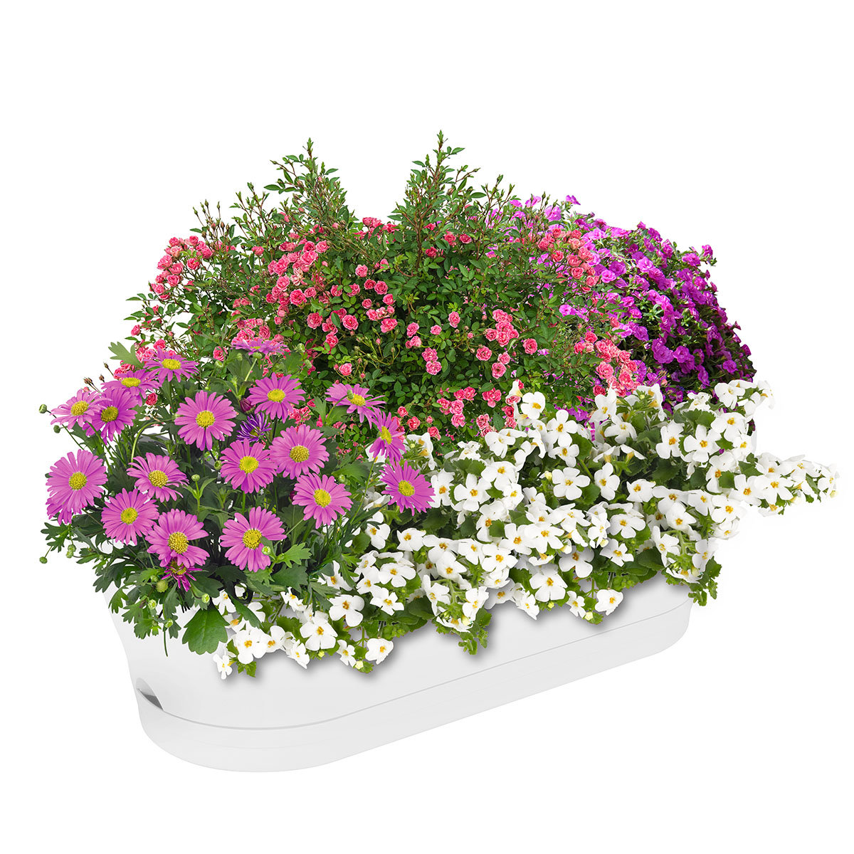 Sommerblumen-Set Prinzessin Lilly, im ca. 11/12 cm-Topf