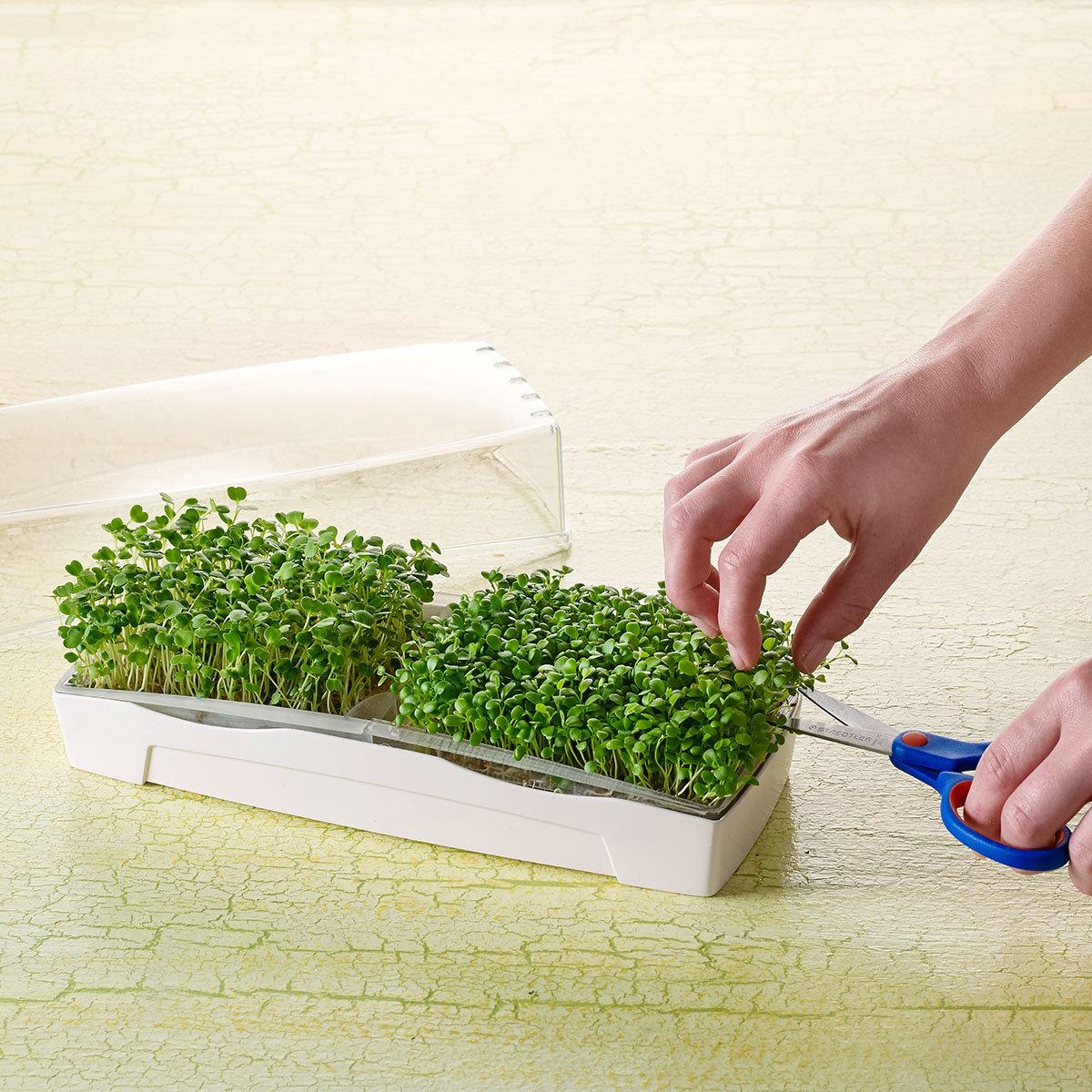 MicroGreen Duo-Garden Anzucht-Set mit 2 Pads & 1 Port. Saatgut