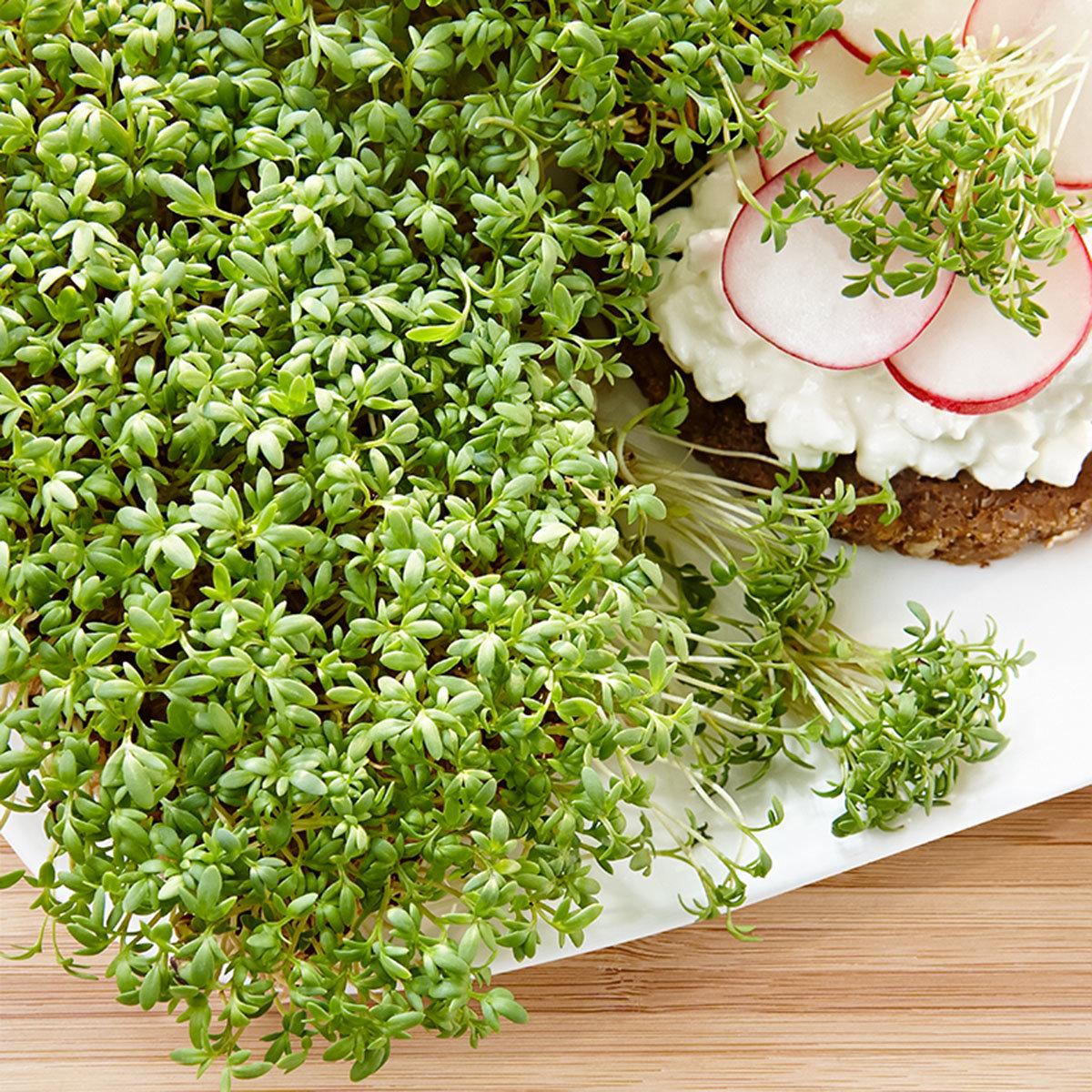BIO Grünsprossen Kresse, 50 g