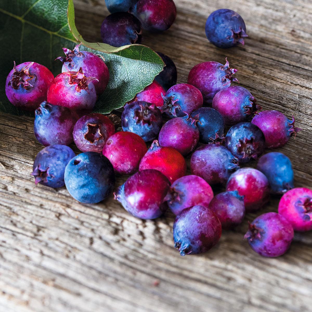 Saskatoonbeere  Saskatoon Berry®, im ca. 19 cm-Topf
