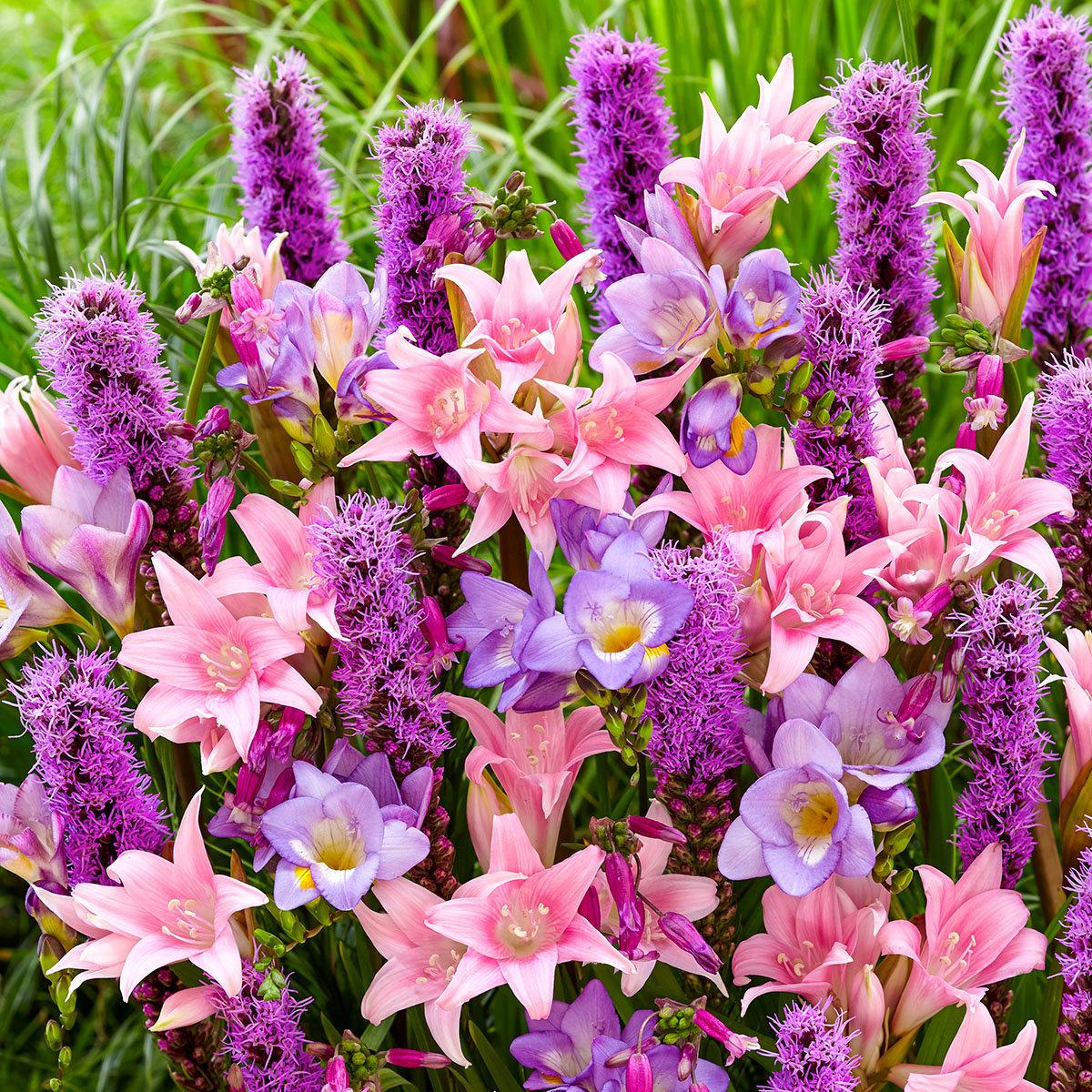 Blumenzwiebel-Set Rosa Herbst