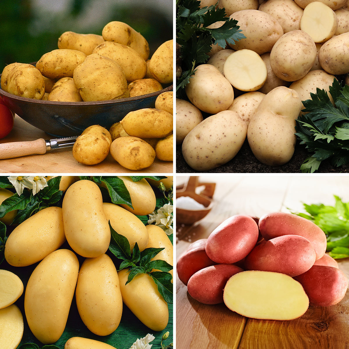 Kartoffel-Quartett Grillkartoffeln, 12 Stück