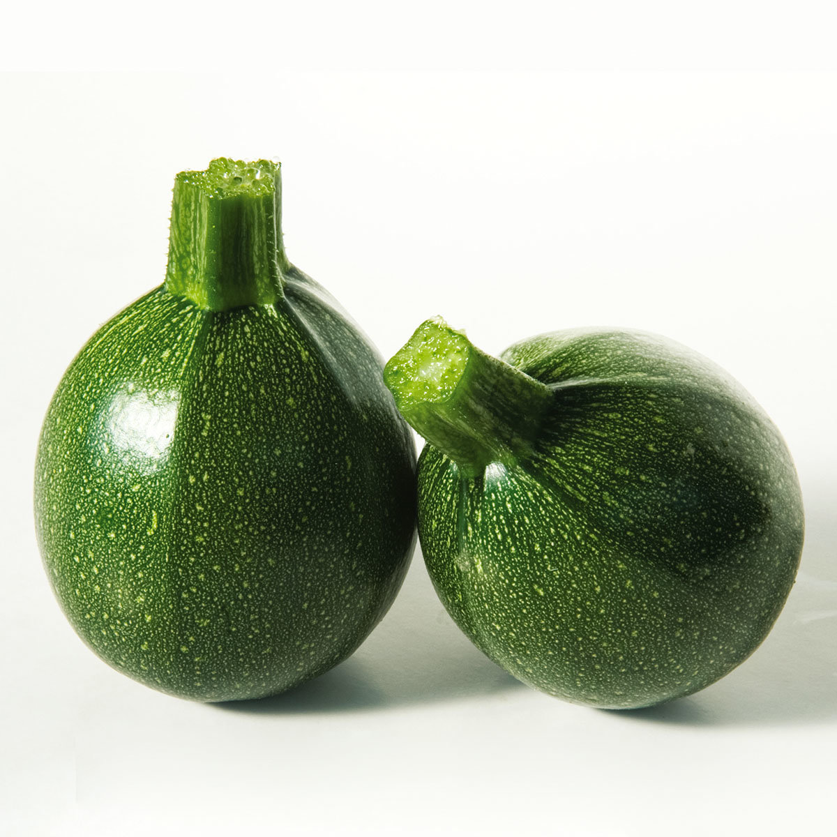 Zucchinipflanze Satelite, im ca. 11 cm-Topf